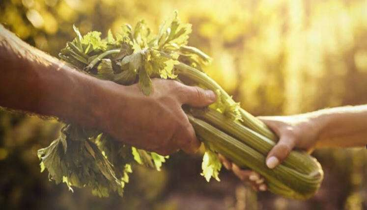 L'agriculture BIO s'(im)plante à Ris-Orangis !